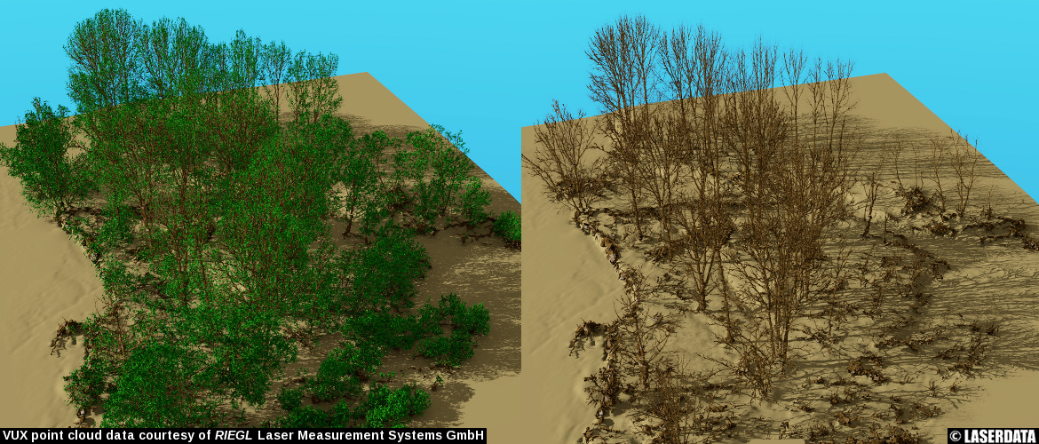 Reconstructed tree models (leaf on/off) from point cloud data